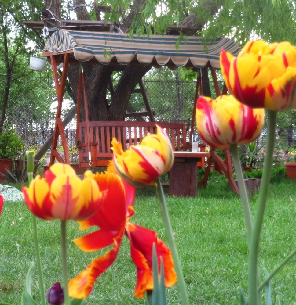Flori de mai (5)