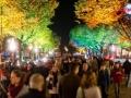 Festival Lights (4)