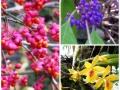 Gr Botanica CJ (5)
