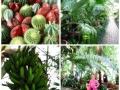 Gr Botanica CJ (7)