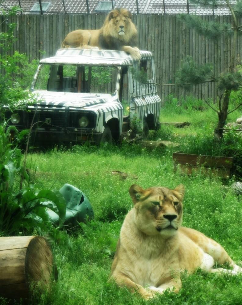 12_Zoo bucuresti