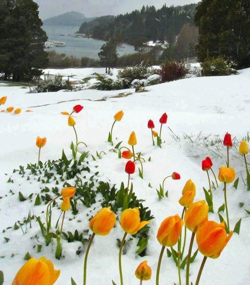 blog in tandem_flori_iarna (1)