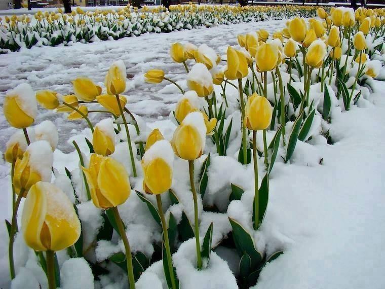 blog in tandem_flori_iarna (12)