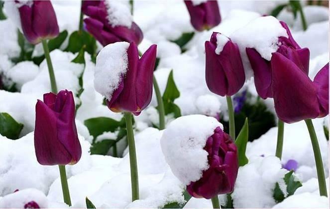 blog in tandem_flori_iarna (6)
