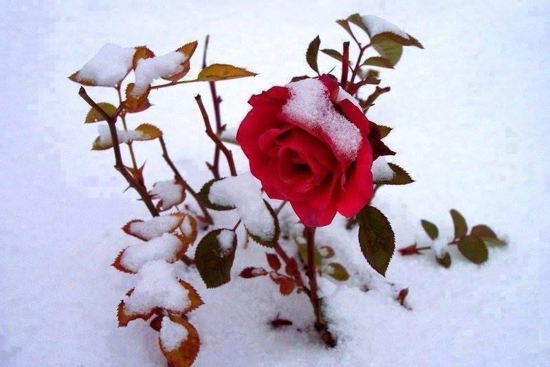 blog in tandem_flori_iarna (8)