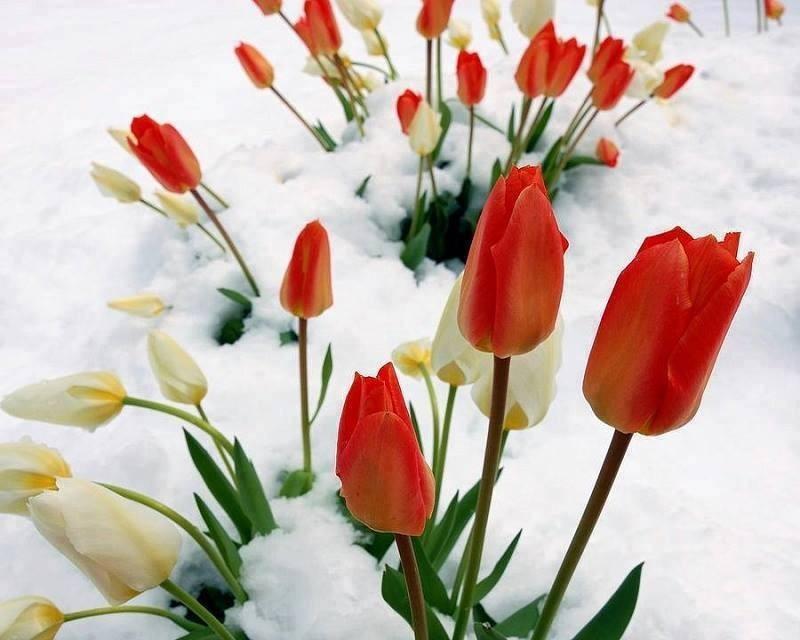 blog in tandem_flori_iarna (9)