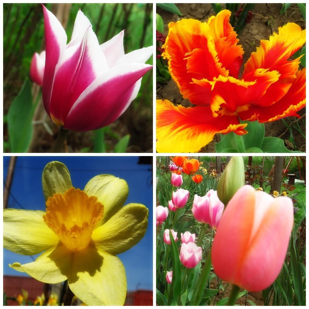 Flori de mai (11).jpg