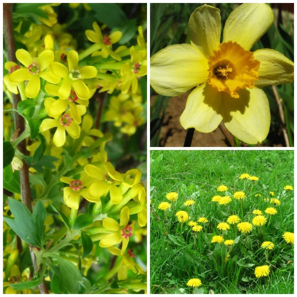 Flori de mai (13).jpg
