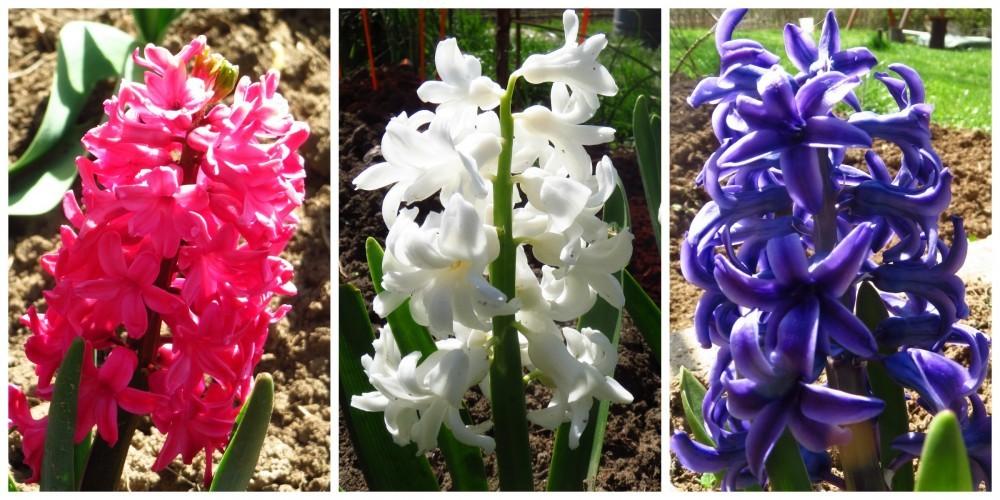 Flori de mai (14).jpg
