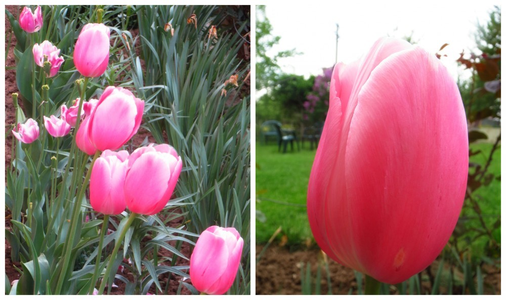 Flori de mai (16).jpg