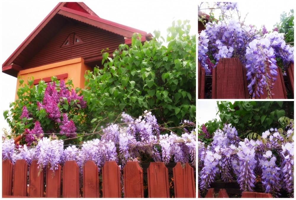 Flori de mai (18).jpg