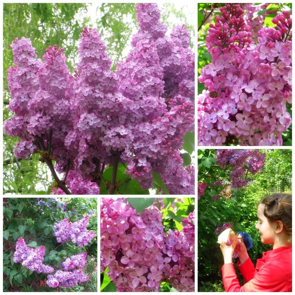 Flori de mai (19).jpg