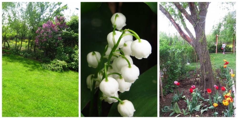 Flori de mai (20).jpg