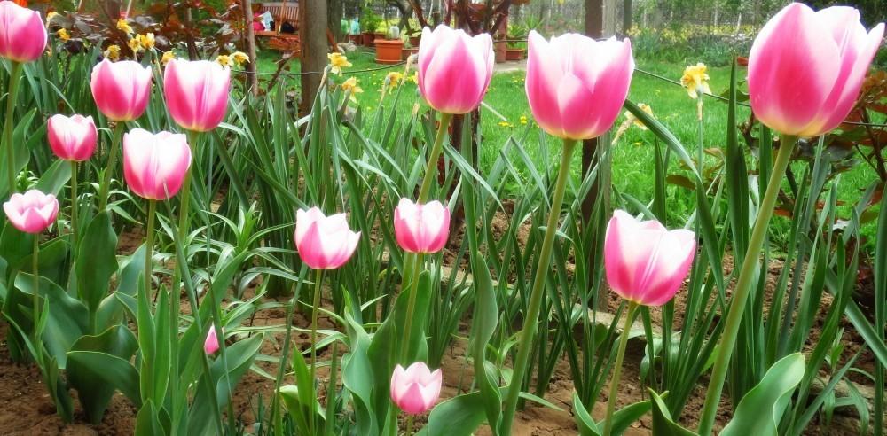 Flori de mai (6).jpg