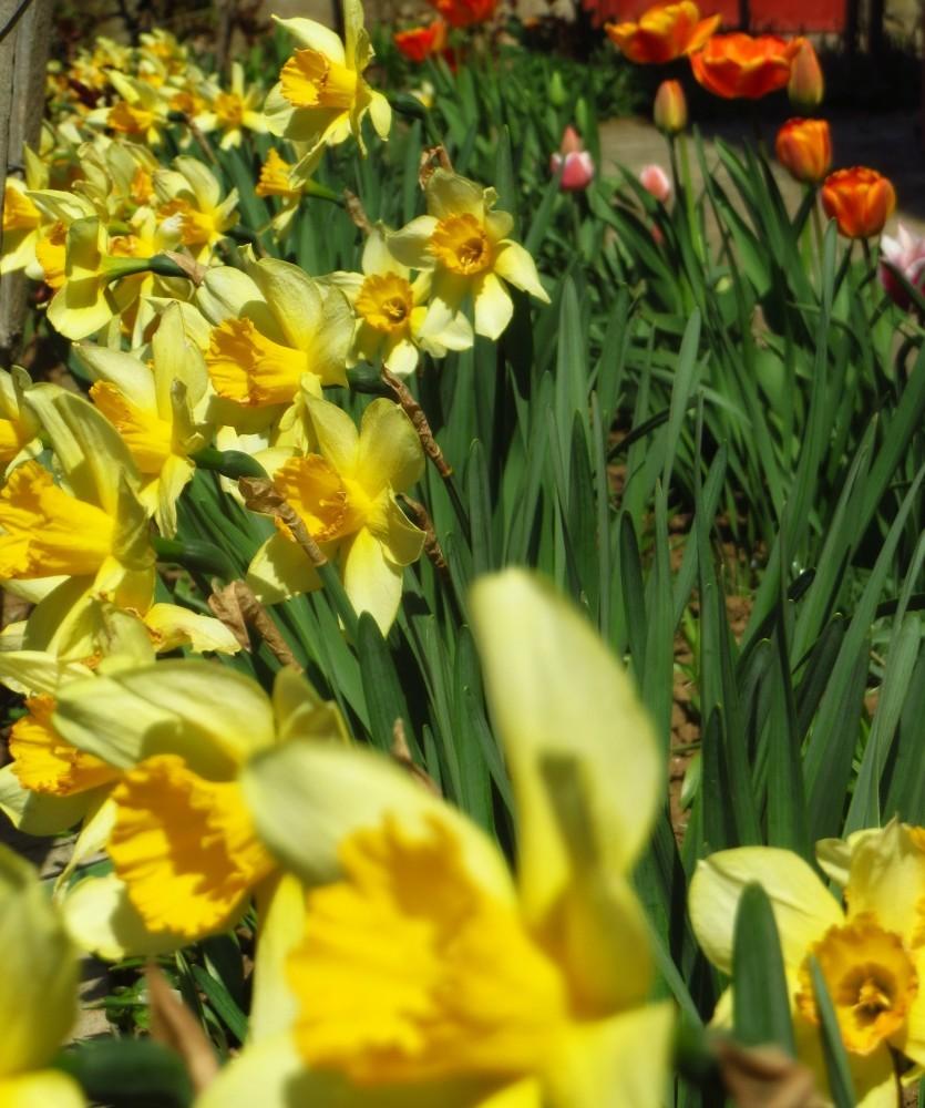 Flori de mai (8).jpg