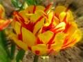 Flori de mai (1).jpg