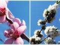 Flori de mai (10).jpg