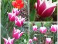 Flori de mai (12).jpg
