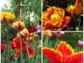 Flori de mai (15).jpg
