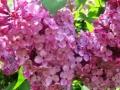 Flori de mai (3).jpg