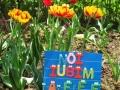 Flori de mai (4).jpg