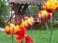 Flori de mai (5).jpg