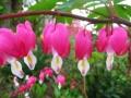 Flori de mai (7).jpg