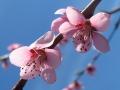 Flori de mai (9).JPG