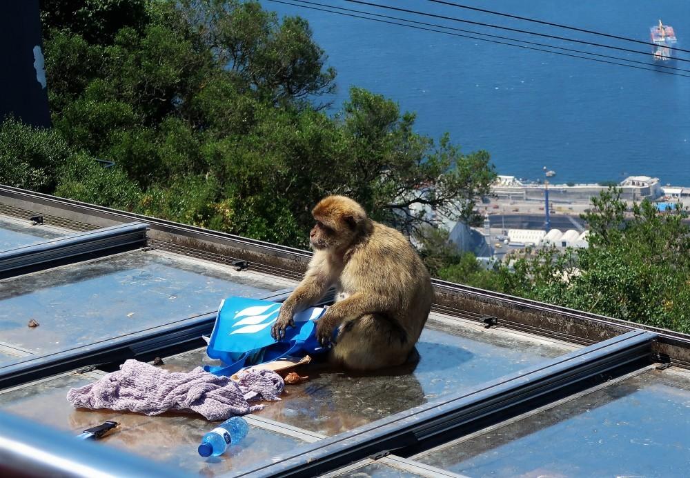 Gibraltar_Blog in Tandem (11)