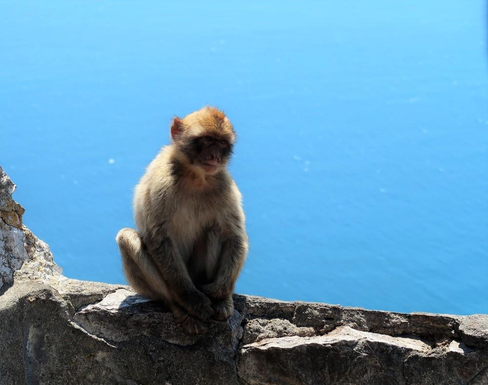 Gibraltar_Blog in Tandem (14)