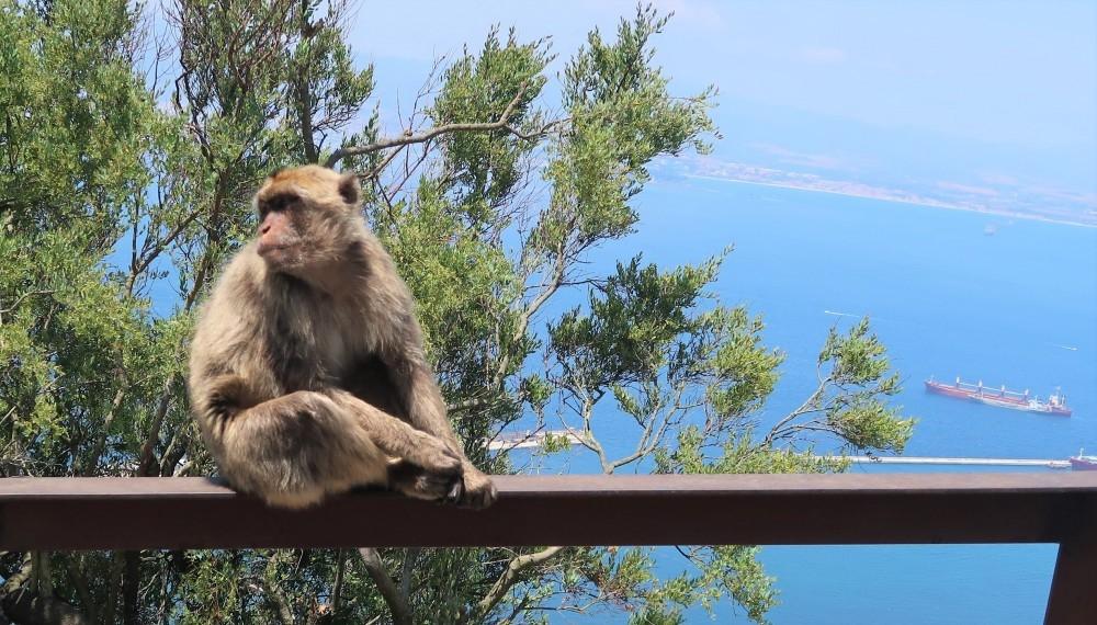 Gibraltar_Blog in Tandem (18)