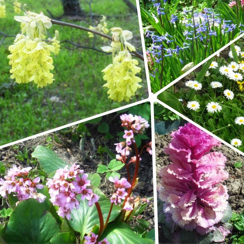 Gr Botanica Bucuresti (11).jpg