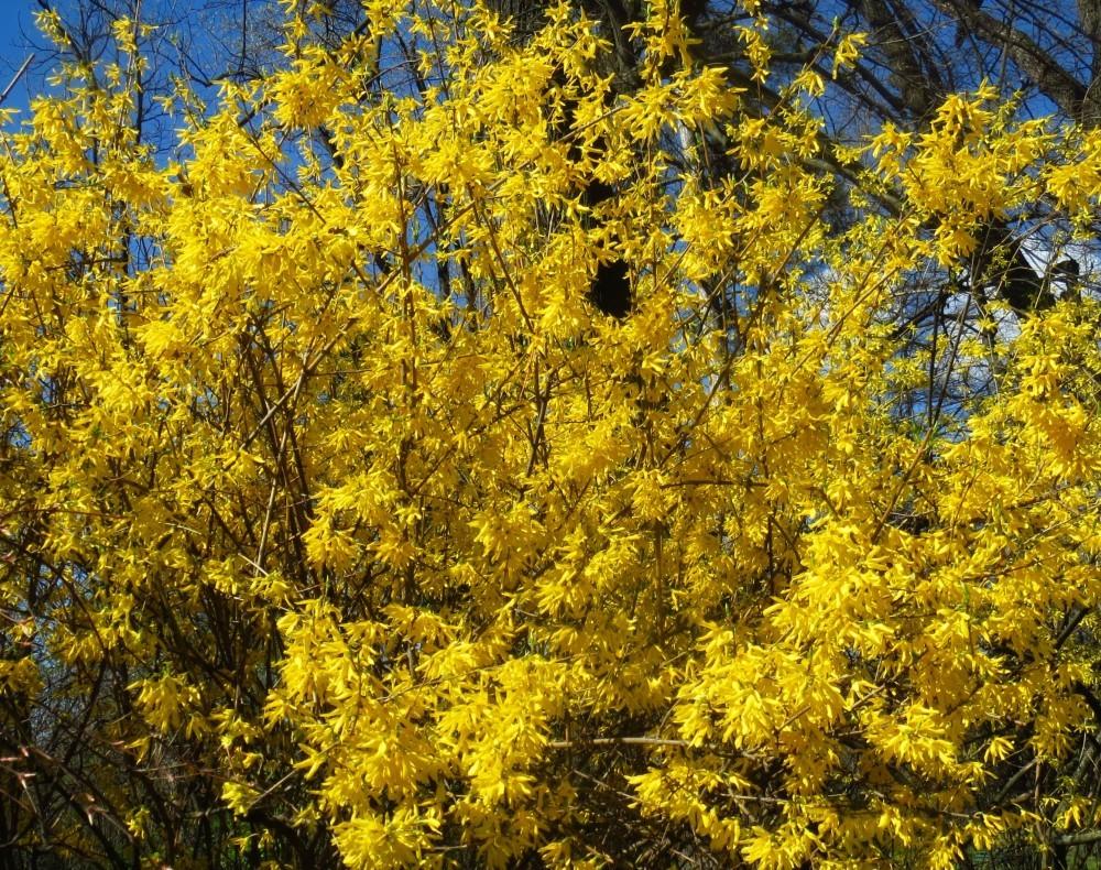 Gr Botanica Bucuresti (12).jpg