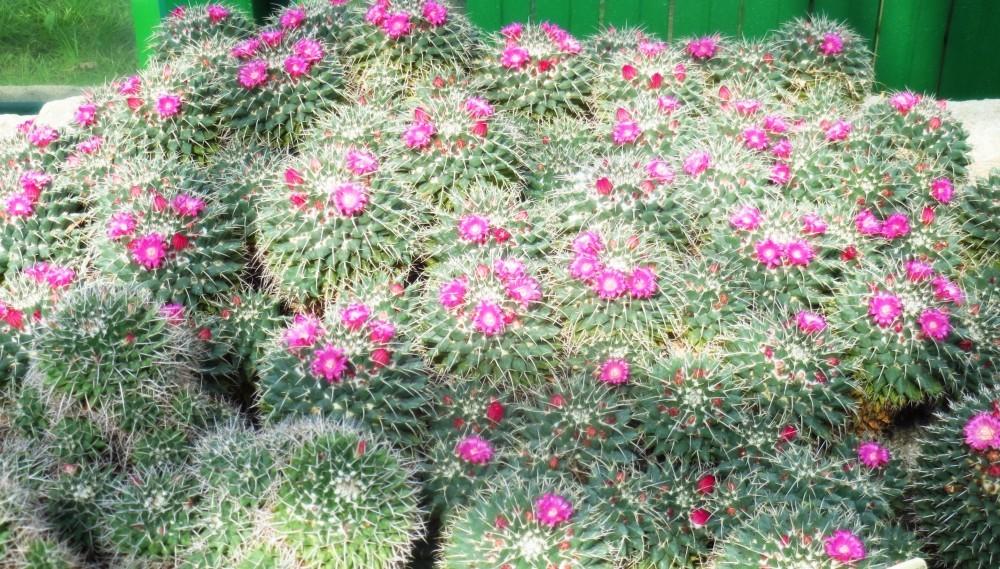 Gr Botanica Bucuresti (16).jpg