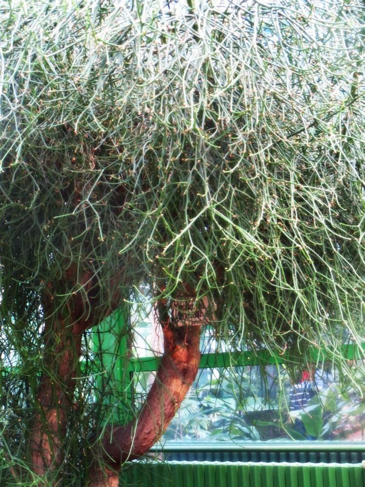 Gr Botanica Bucuresti (24).jpg
