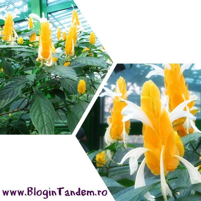 Gr Botanica Bucuresti (4).jpg