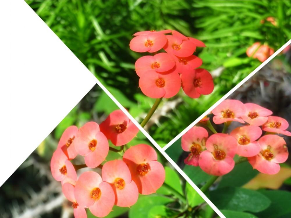 Gr Botanica Bucuresti (6).jpg