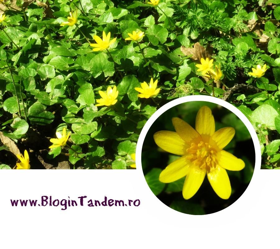 Gr Botanica Bucuresti (7).jpg