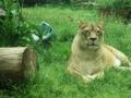 Zoo Anca 3