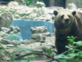 Zoo Anca 5