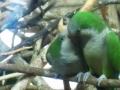 Zoo Anca 8