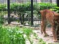 Zoo anca 6