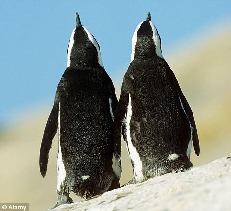 pinguini (5)