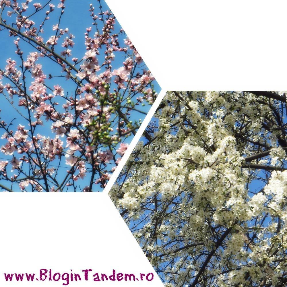 spring_15