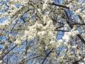 spring_10