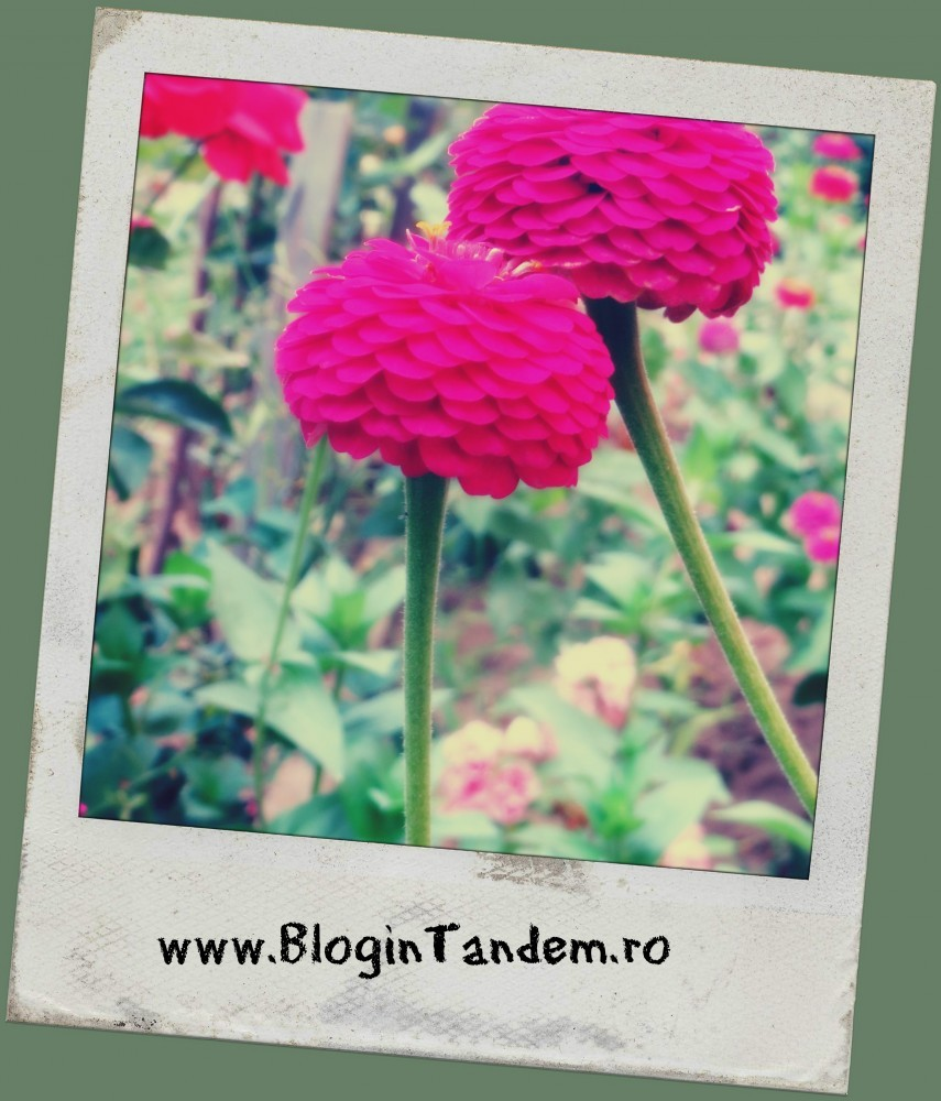 Semne bune (5)