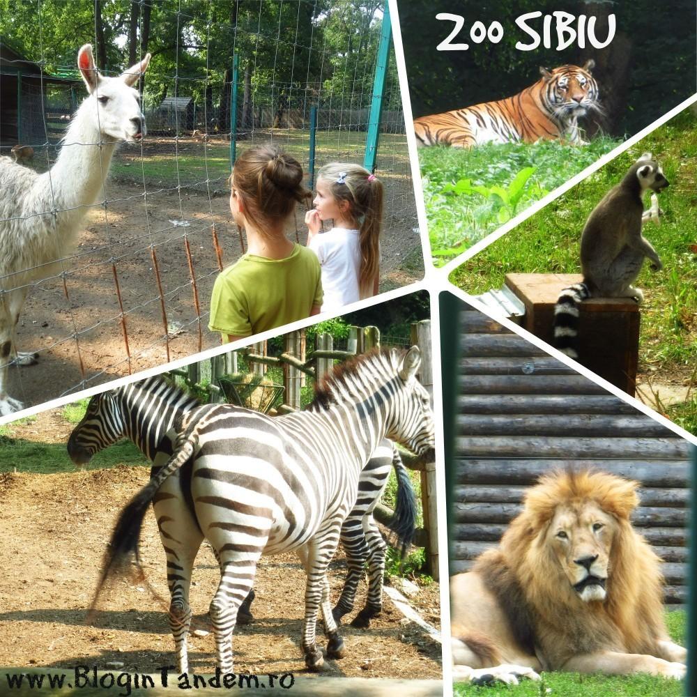 Sibiu_prin ochii emei (5)