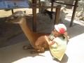 5_zoo (3)