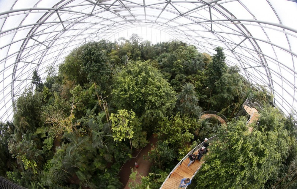 visitors-climb-up-stairs-on-the-newly-opened-treetop-path-in-the-masoala-rainforest-hall-at-the-zoo-in-zurich.jpg