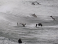 a-surfer-watches-a-group-of-dolphins-leap-in-the-waters-of-bondi-beach-in-sydney.jpg